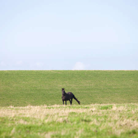 horse on grassy dyke in dutch province of friesland in the netherlands