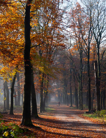 couple walks in autumnal forest near dutch towns of zeist and utrecht in the fall