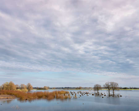 flooded trees in flood plains of river Waal in the netherlands