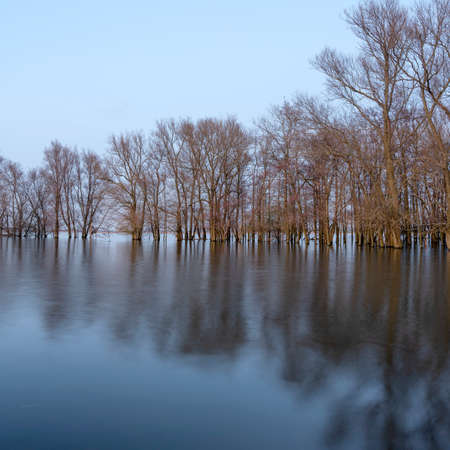 flooded forest in flood plains of river Waal in the netherlands at sundown