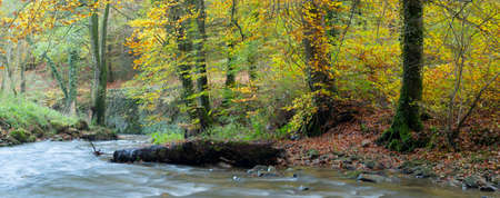 forest stream and beautiful autumn colors in the woods