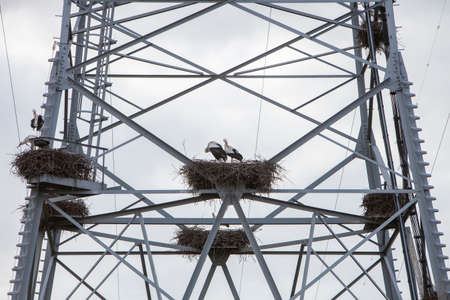 stork nests in electricity pylon under grey sky