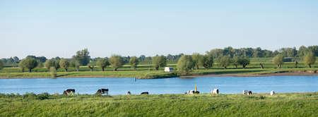 black and white spotted holstein cows and caravan on bank of river lek near wijk bij duurstede in holland Reklamní fotografie