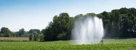irrigation of crop on field in the north of france