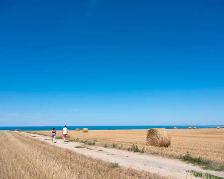 rolls of straw on field under blue sky with ocean in the background in french normandy Reklamní fotografie