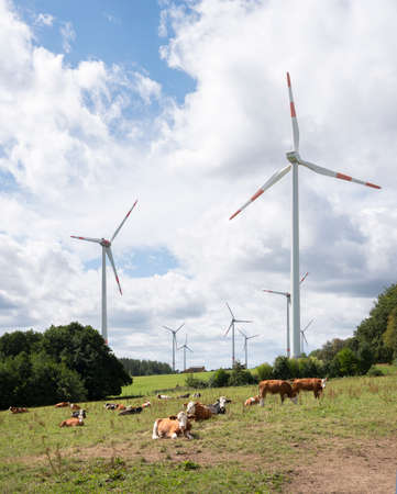 cows and wind turbines in meadow