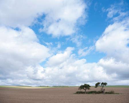 trees and fields on high plane neer Cochem in german voreifel