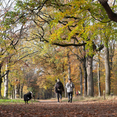 couple and dog in autumn forest near utrecht in the netherlands