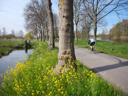 man on bicycle on country road near Woerden in the green haert of holland