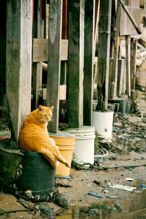 wasted: Cat under the basement of a house in a wasted bay, Hong Kong Stock Photo