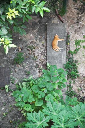 Topview of a cat sleeping in backyard, Hong Kong Stock Photo