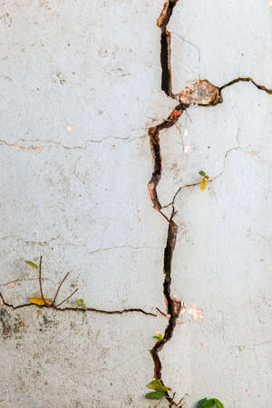 cracked earth: Crack on wall with leaves Stock Photo