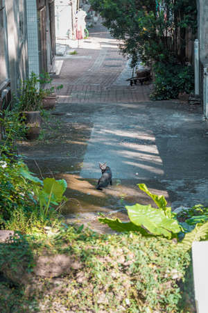 back alley: Stray cat in back alley , Hong Kong Stock Photo