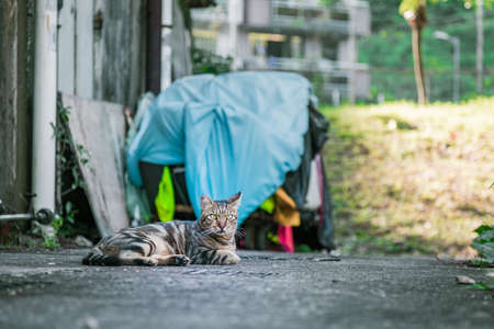 stray: Stray cat in old town, Hong Kong Stock Photo