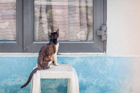 wet-ted cat look back to window, winter Stock Photo