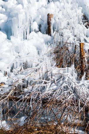 Ice on Tree close up