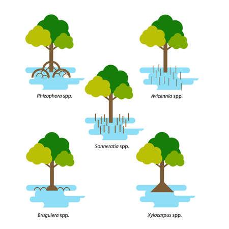 Various species of mangrove in flat design illustration