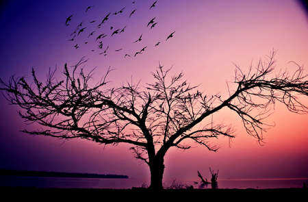 Birds flying from lonely tree