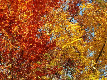 Foliage of fall Stock Photo