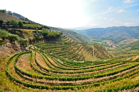 Douro Valley: Vineyards near Duero river and Pinhao Portugal 写真素材