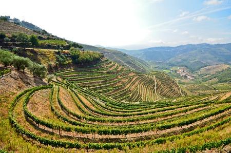 Douro Valley: Vineyards near Duero river and Pinhao Portugal Standard-Bild
