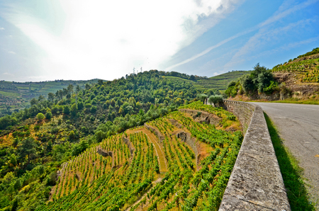 peso: Douro Valley: Vineyards and small village near Peso da Regua, Portugal