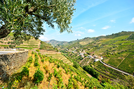 porto: Douro Valley: Vineyards and small village near Peso da Regua, Portugal