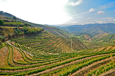 portugal agriculture: Douro Valley: Vineyards near Duero river and Pinhao, Portugal Stock Photo