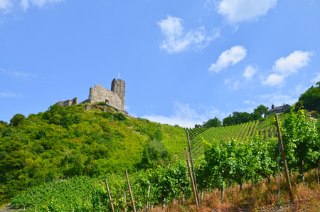 landshut: Moselle Valley Germany: View to vineyards and ruins of Landshut castle near Bernkastel-Kues, Europe