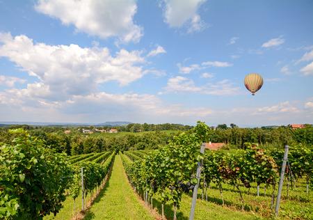 vin chaud: Ballon volant au-dessus des raisins de vin rouge dans la vigne avant la r�colte, Styrie Autriche Europe