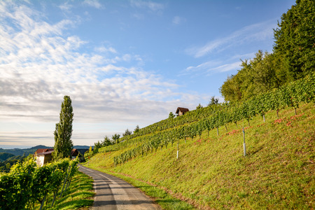 wine road: Vineyards along the South Styrian Wine Road in autumn, Austria Europe