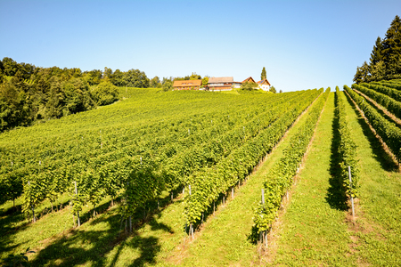 wine road: Vineyards and winery along the South Styrian Wine Road in autumn, Austria Europe