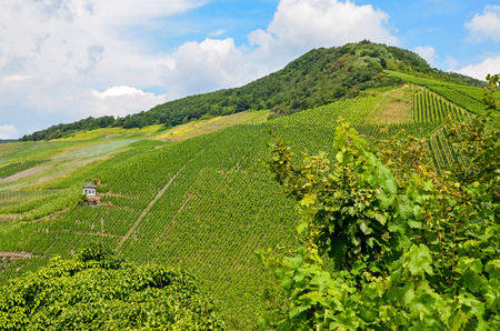 Moselle Valley Germany: View to the hills with vineyards near Bernkastel-Kues in summer, Europe