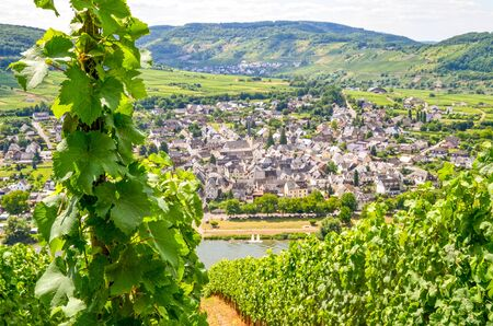 View from vineyards to river Moselle and Village Puenderich - Mosel wine region in Germany