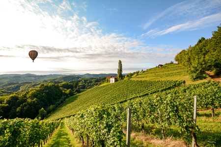 Vineyards with hot air balloon near a winery before harvest in the tuscany wine growing area, Italy Europe