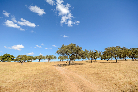 Hilly Alentejo landscape with cork oak trees and yellow fields in late summer near Beja, Portugal Europe Stock fotó