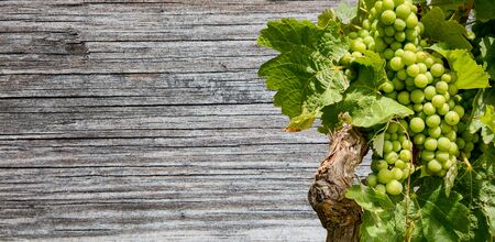 Grapevine from a vineyard with a wooden table in the background Stok Fotoğraf