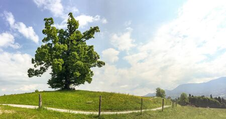 View to hiking trail and old linden tree in the bavarian alps near Munich in summer, Bavaria Germany Europe