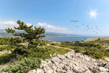 View from island Krk with rocky coastline and pine tree to dalmatian coast near Rijeka on Adriatic sea, Croatia Europe