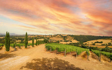 View over vineyards with red wine grapes and typical Tuscan landscape with agricultural fields and winery, tasting of the newly bottled wine from the barrel in Chianti area, Tuscany Italy