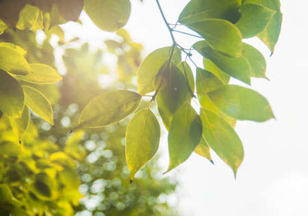 irradiation: Sunshine through the leaves