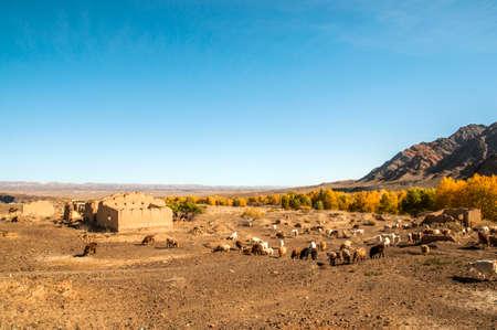 plateau: Autumn plateau Stock Photo