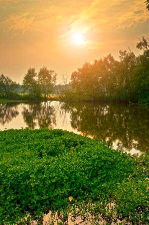 地方の湿地