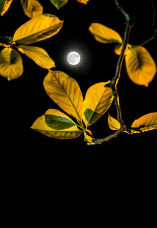irradiation: leaves and moon