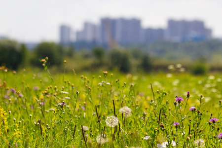 green grass and flowers against the background of the city