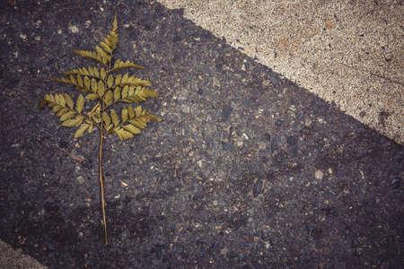 bumpy: Branch drop on street vintage style Stock Photo