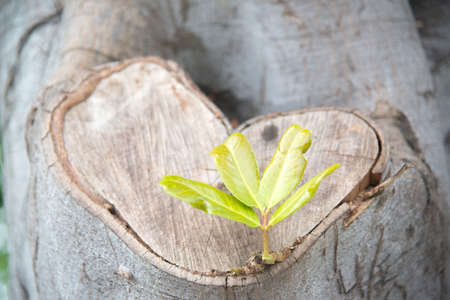 bark carving: heart shape wood and sprout Stock Photo