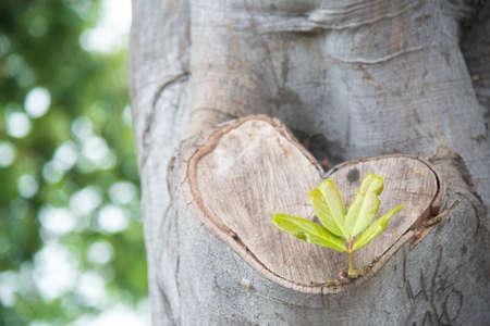 heart shape wood and sprout Foto de archivo
