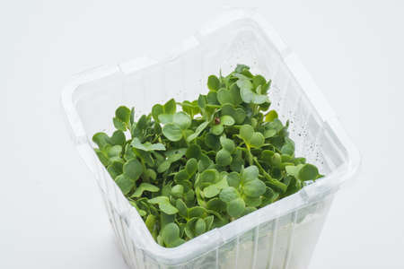 packed: packed radish sprout