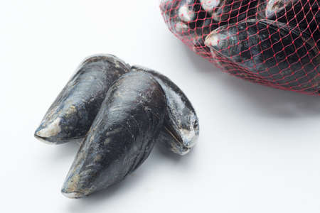 mussel: isolated raw mussel Stock Photo